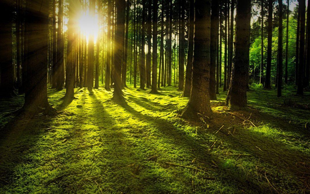 Waldinvestments – Gut fürs Klima, gut fürs Portemonnaie?
